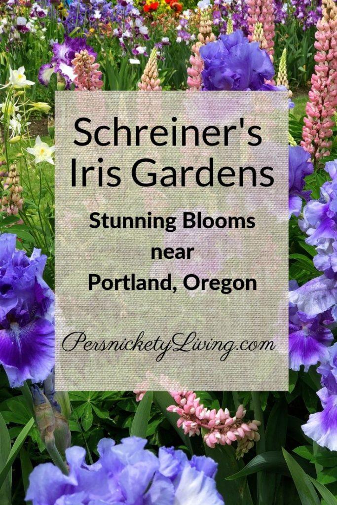 Schreiner's Iris Gardens Near Portland, Oregon